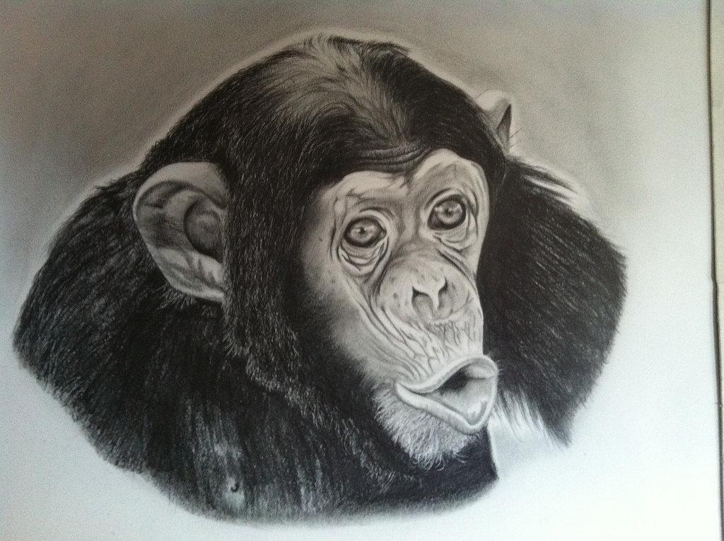 что картинки обезьян нарисовать узнал этом