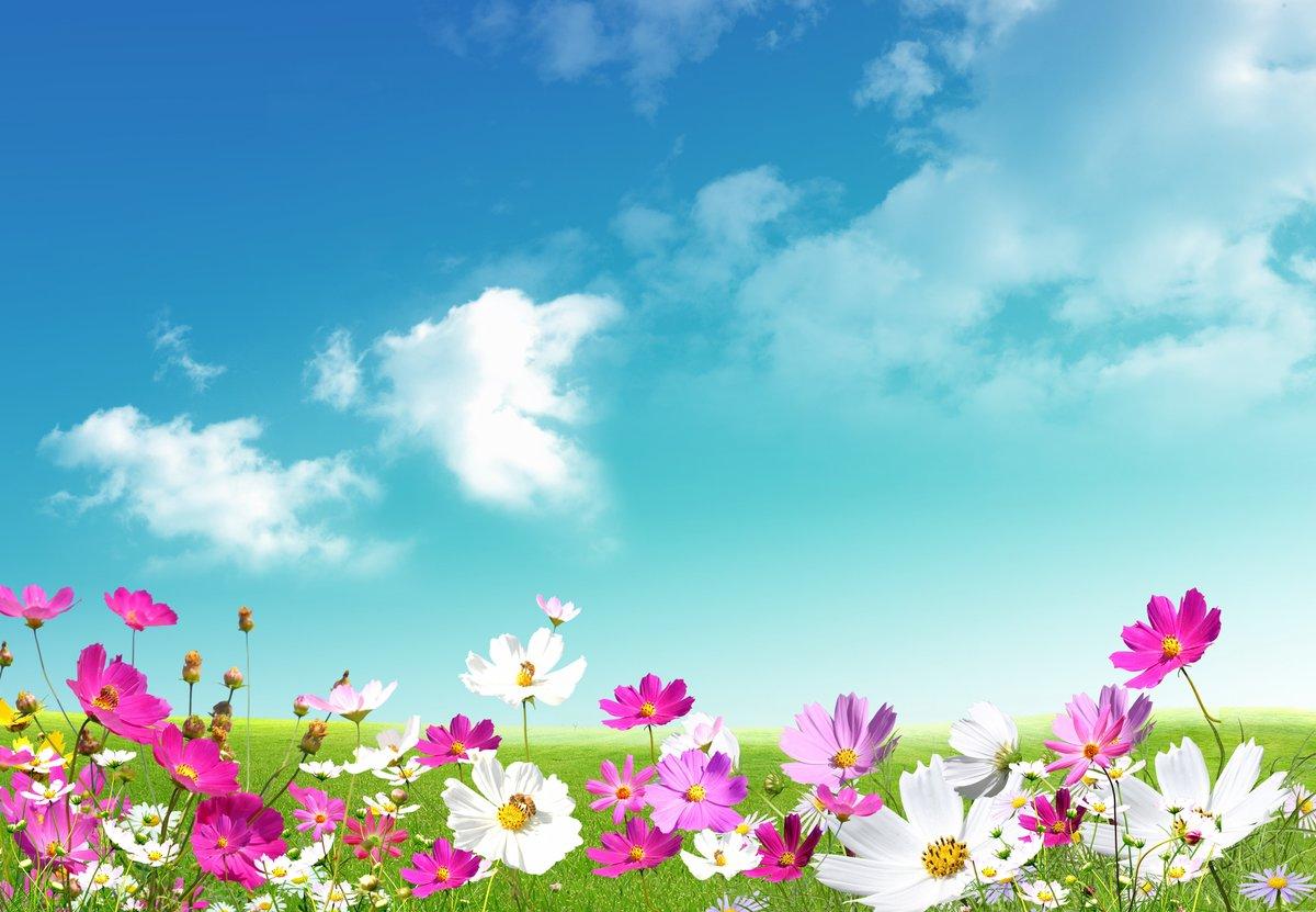 Как всегда, картинки для фона с цветами