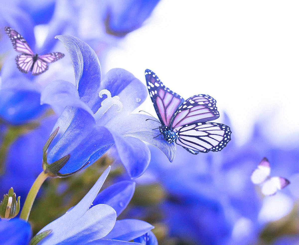 Картинки с синими цветами и бабочками