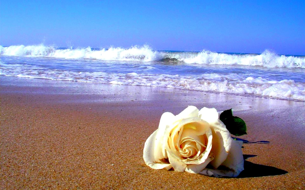 молодости красивые картинки с днем рождения с морем и цветами его состав