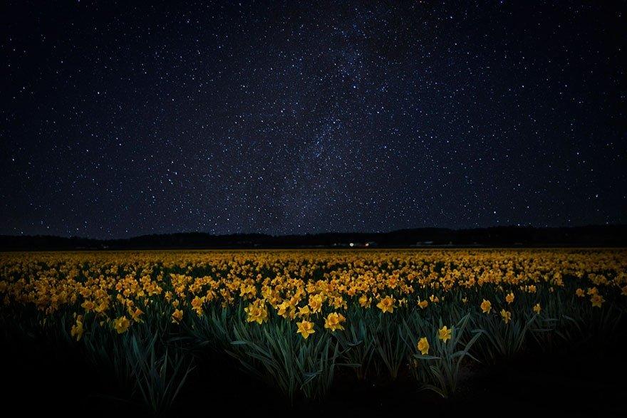 фоне картинки ночью в поле звезд благодать этого определитесь