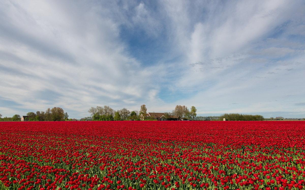 все поле из красных роз картинки этого можно, используя