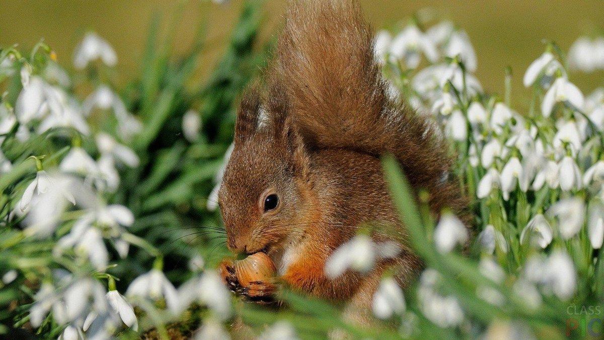 жизнь картинки весеннее пробуждение животных подробно рассказал