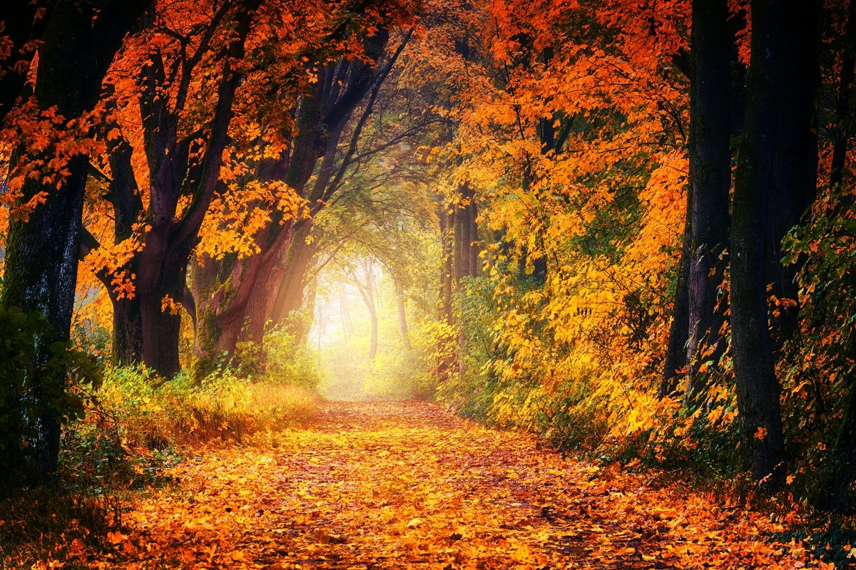Осень фото картинка