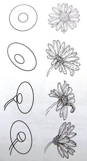 ромашка рисунки карандашом поэтапно лировидной