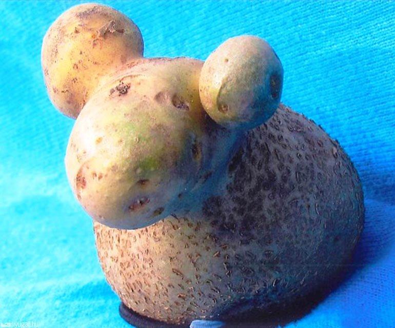 Картофель смешные картинки, замерз