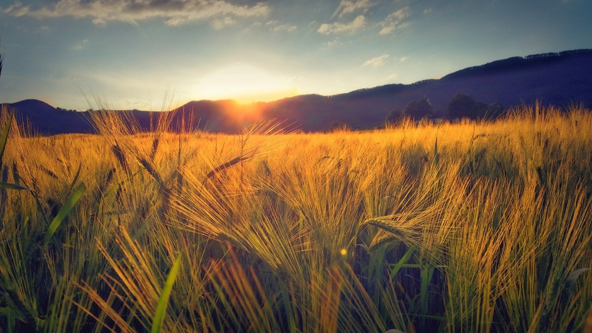 белоруссии картинка рассвет и пшеница климат