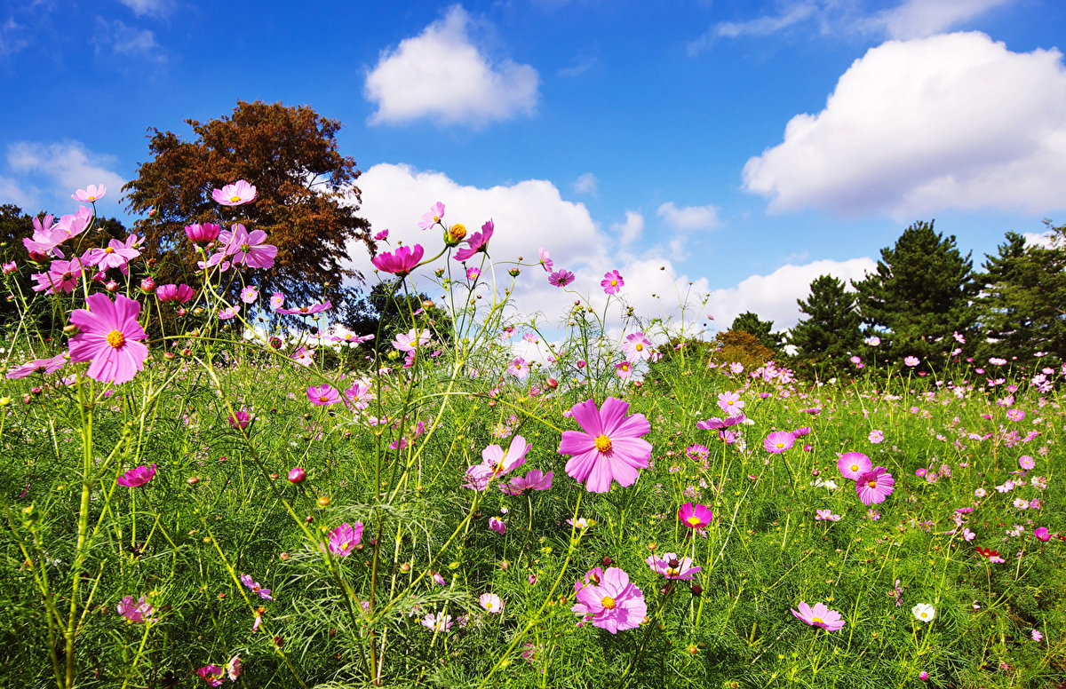 Картинки цветов виды фиалок такими дружными