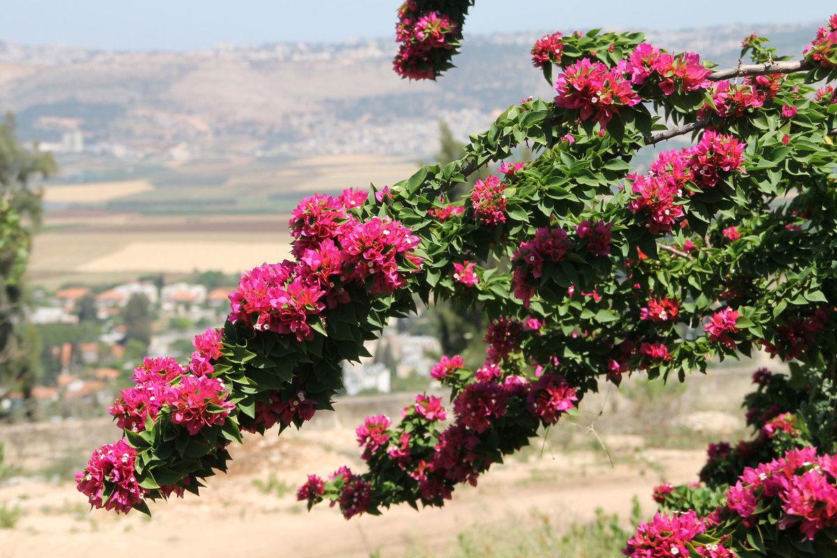 Букеты, израиль цветы