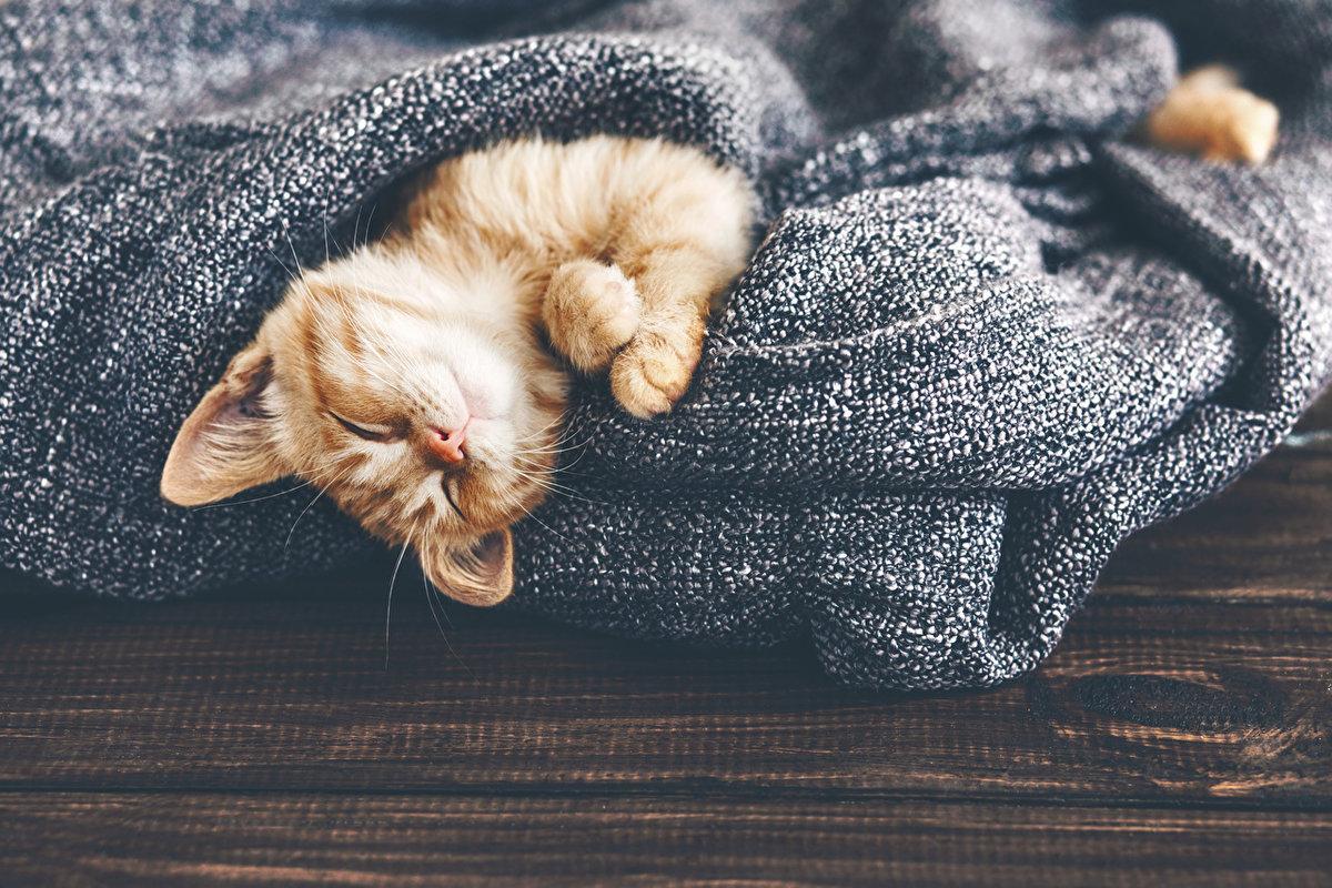 Картинки сонный котенок