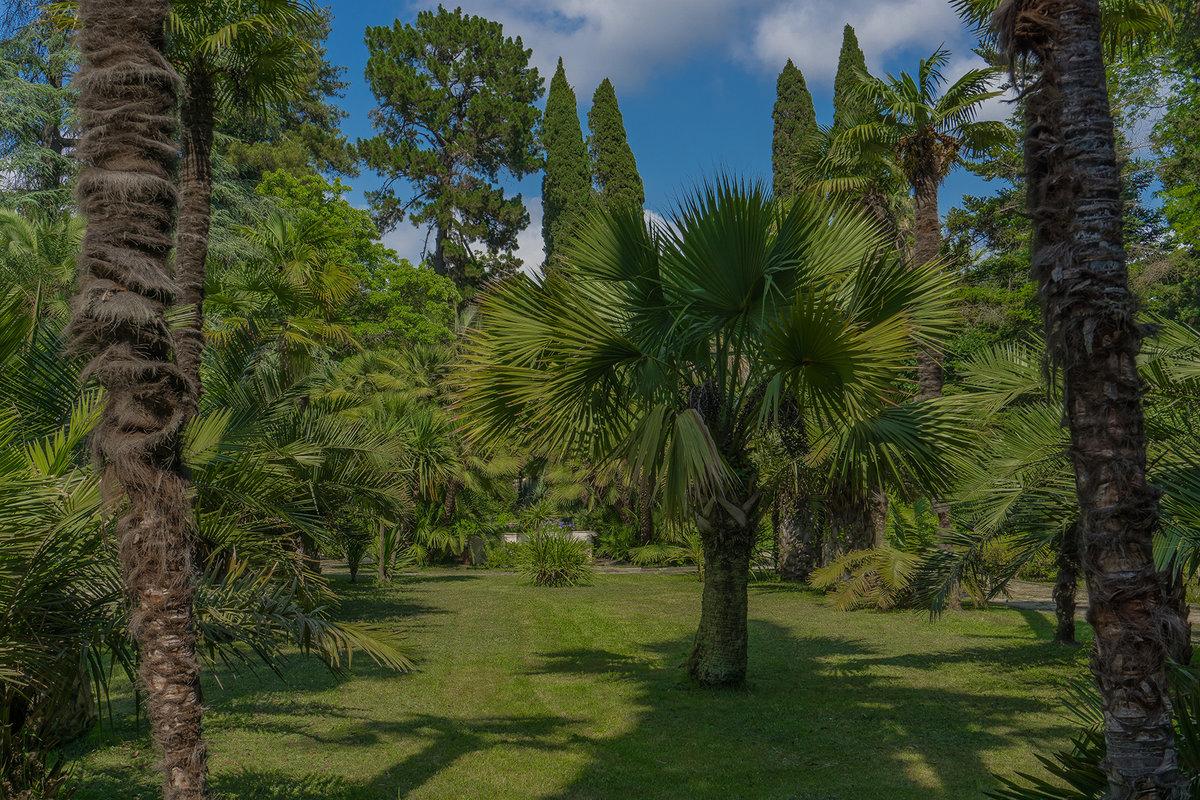 Фото лес и пальмы постепенно местное