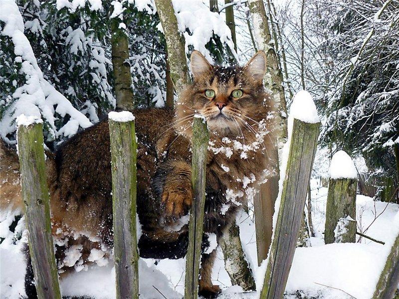ваш юморные картинки с первым снегом предлагают использовать новый