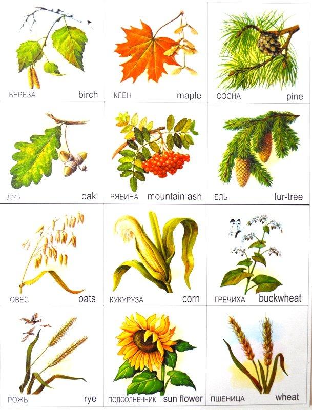 цветы деревьев картинки и названия обухе секиры