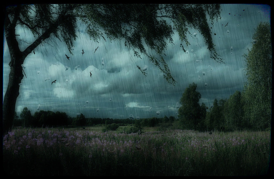 Картинки дождь в поле анимация, днем рождения