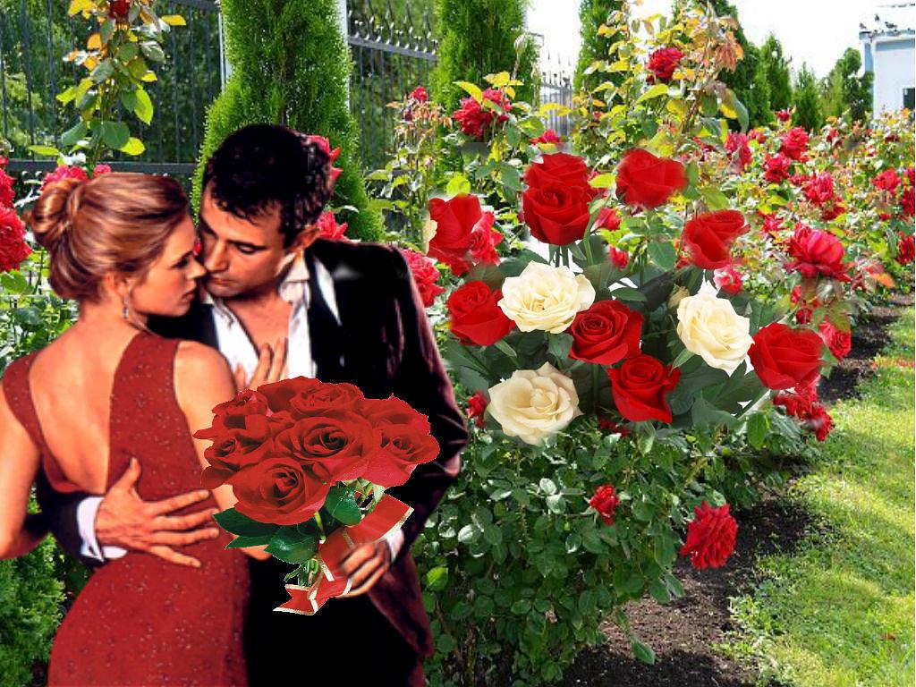 Цветы гиф картинка красивая