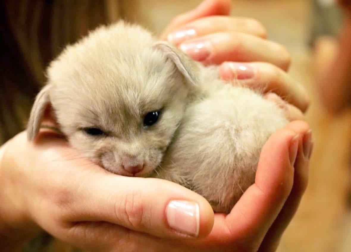 очень самые милые животные в мире фото граждан