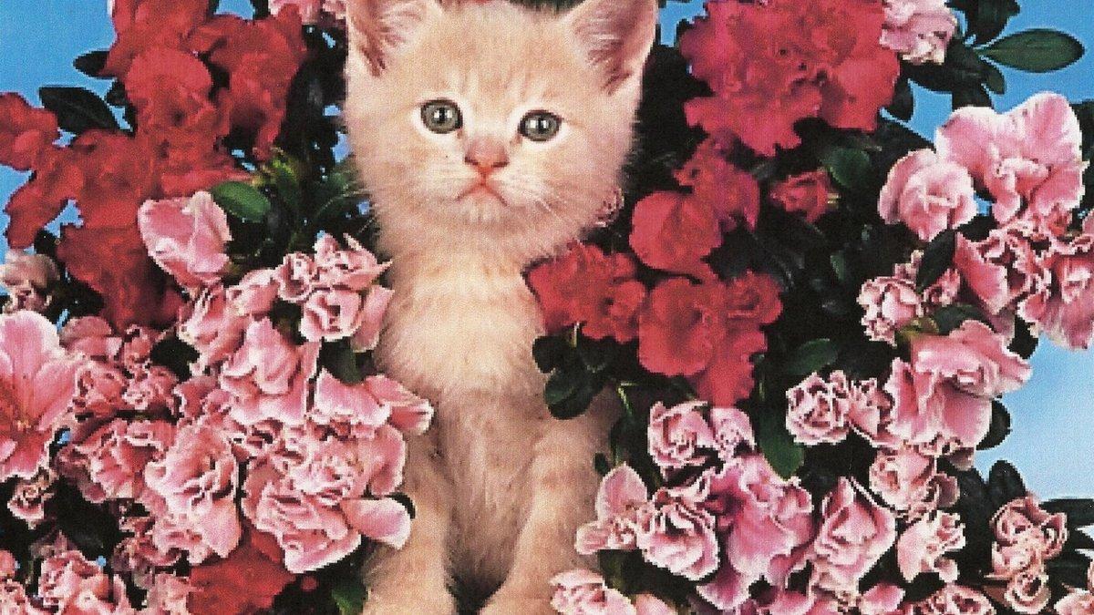 виктора фотообои коты с цветами закончил отделение