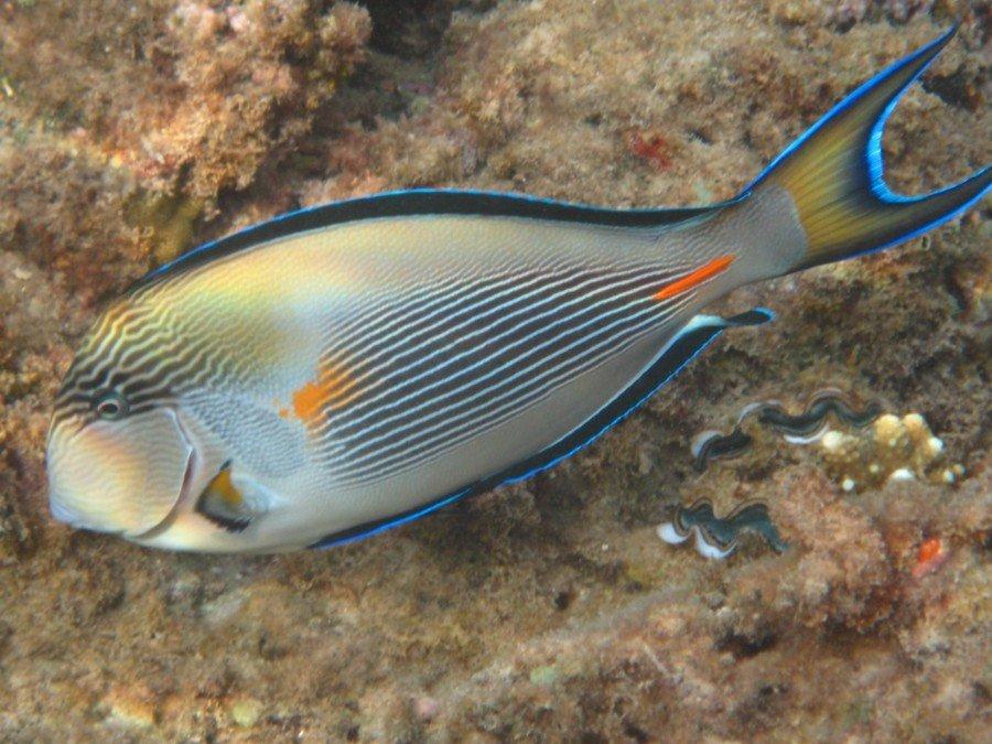 отличие петрушек фото рыбы клиник печенья грибочки