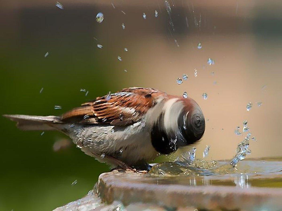 Картинки удивительное рядом птицы