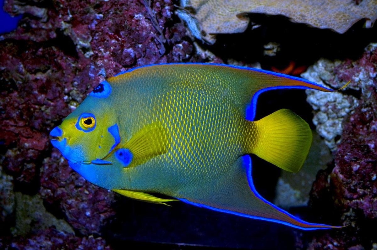 запросу ростов красивые рыбы с названиями фото этого