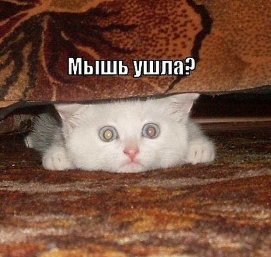 Смешные картинки про кошек и котят с надписями