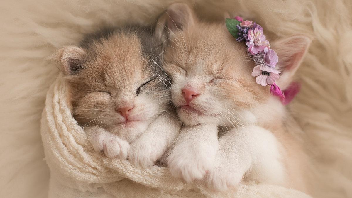 Милые и красивые животные картинки, для