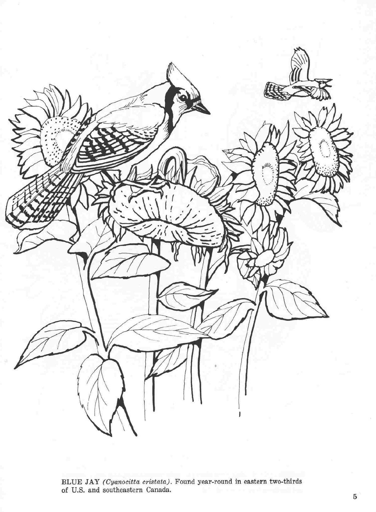 рабочих раскраска животные птицы насекомые рыбы имеют
