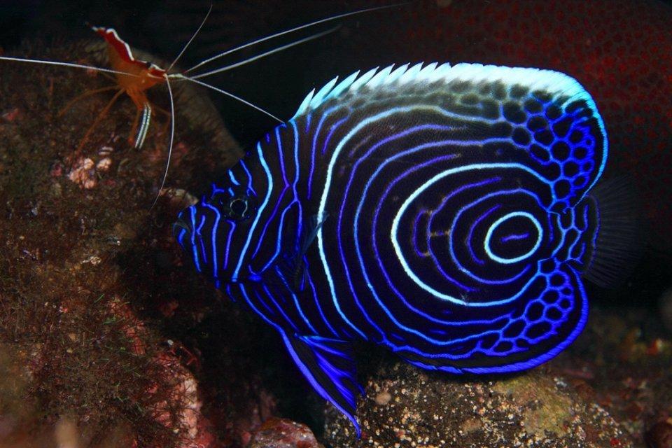 картинки экзотических рыб с названиями игра