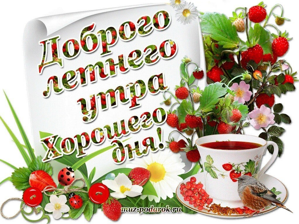 Доброе утро картинки красивые летние новые хорошего настроения