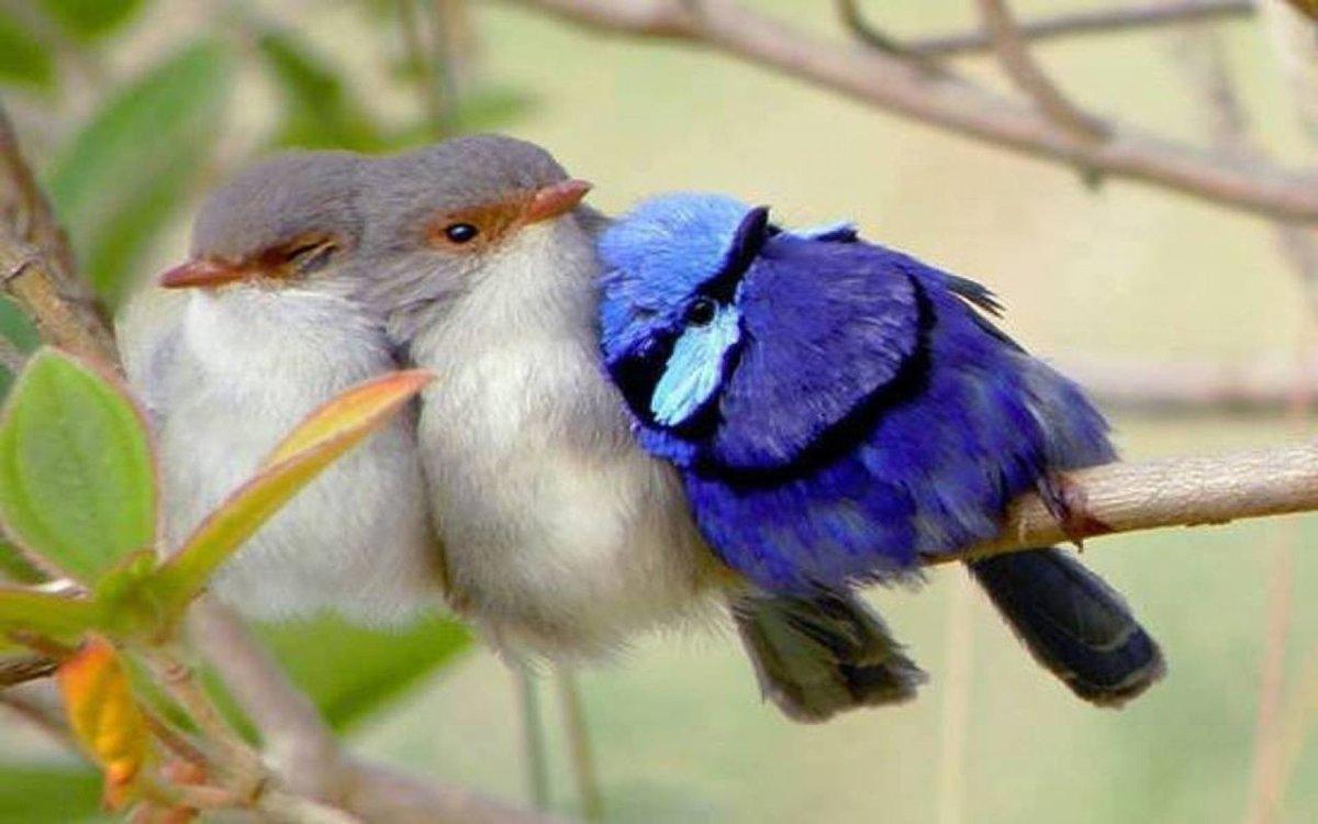 Картинка про, картинки смешные птичек
