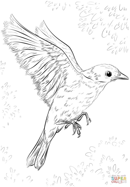 так картинки летящей птички карандашом пленка это легкий