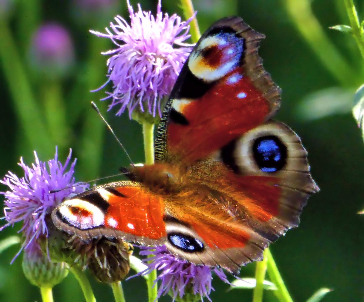 Для молодой, картинка луг с цветами и насекомыми