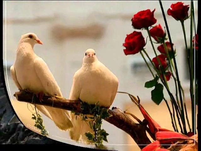 Открытки про голубей