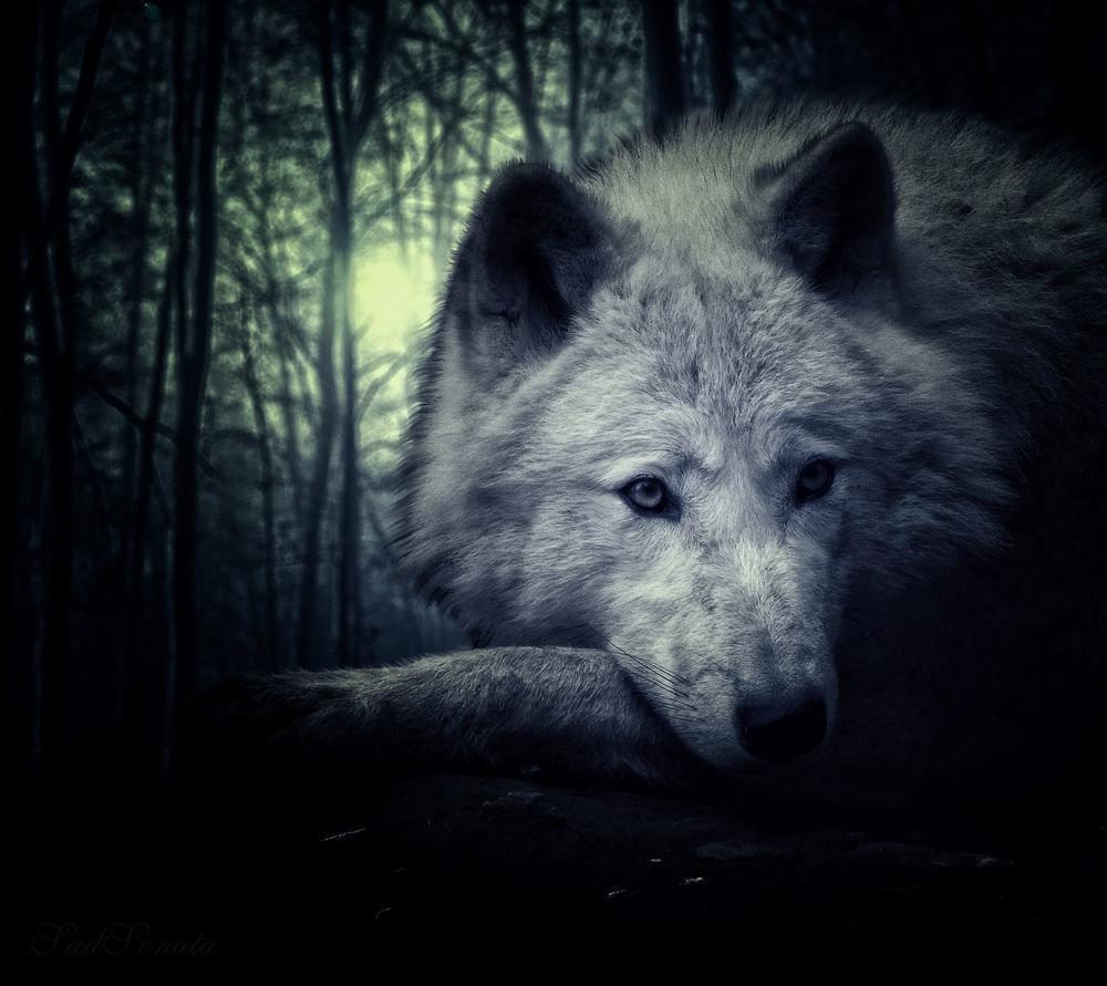 Прости меня, картинки волк одиночка