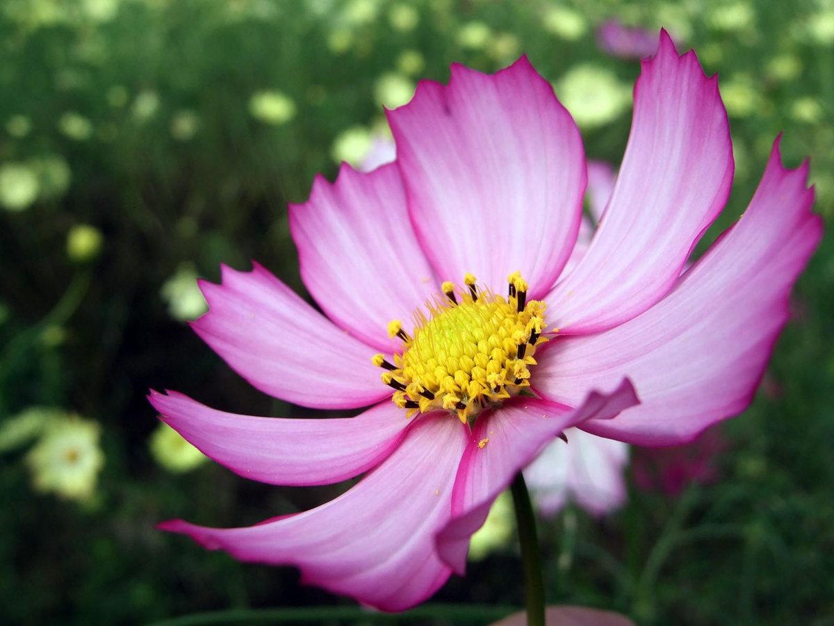 Картинка фото цветов
