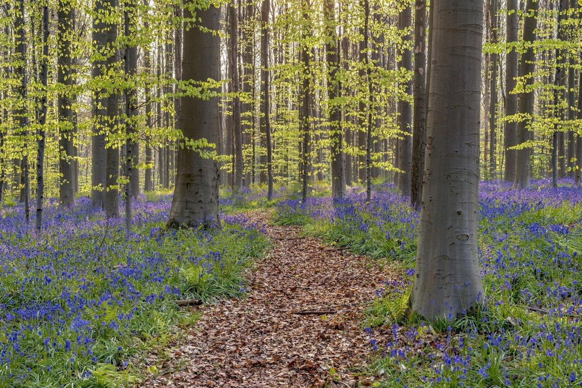 красивые картинки весенние лес