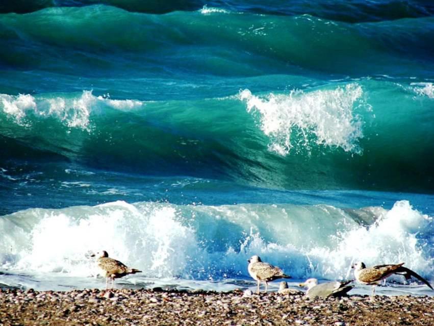 Картинки живые море