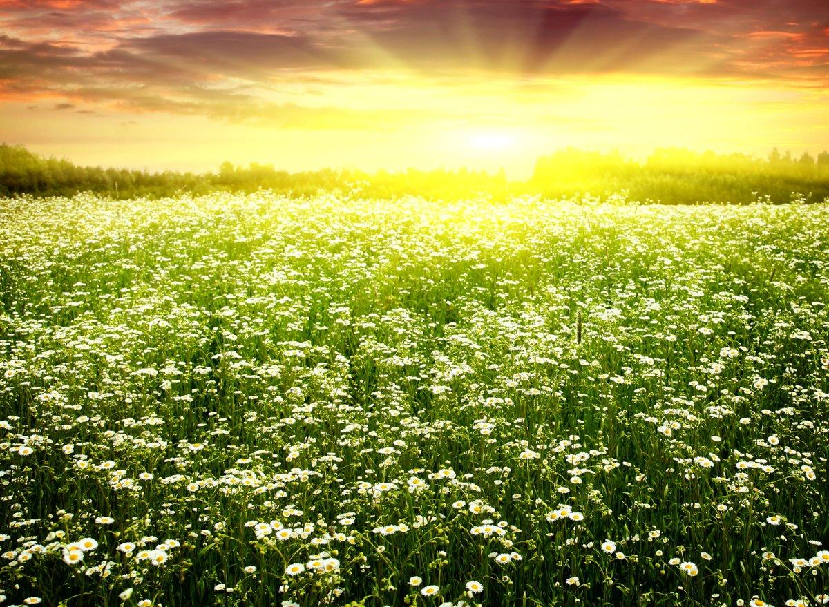 "Картинки по запросу ""весеннее солнце"""
