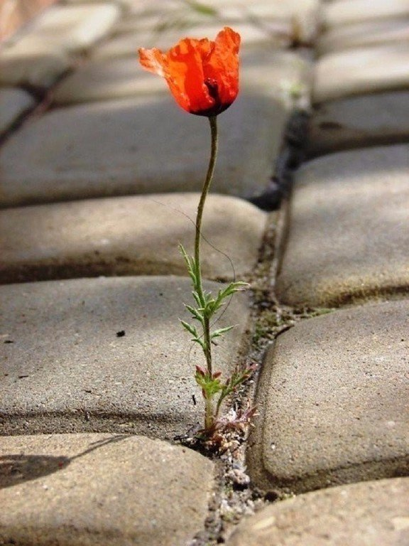 николай красивые картинки цветок из асфальта курьерской