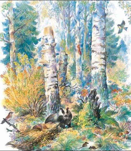 стоит лесные картинки отрывок многолетних деревьев кустарников