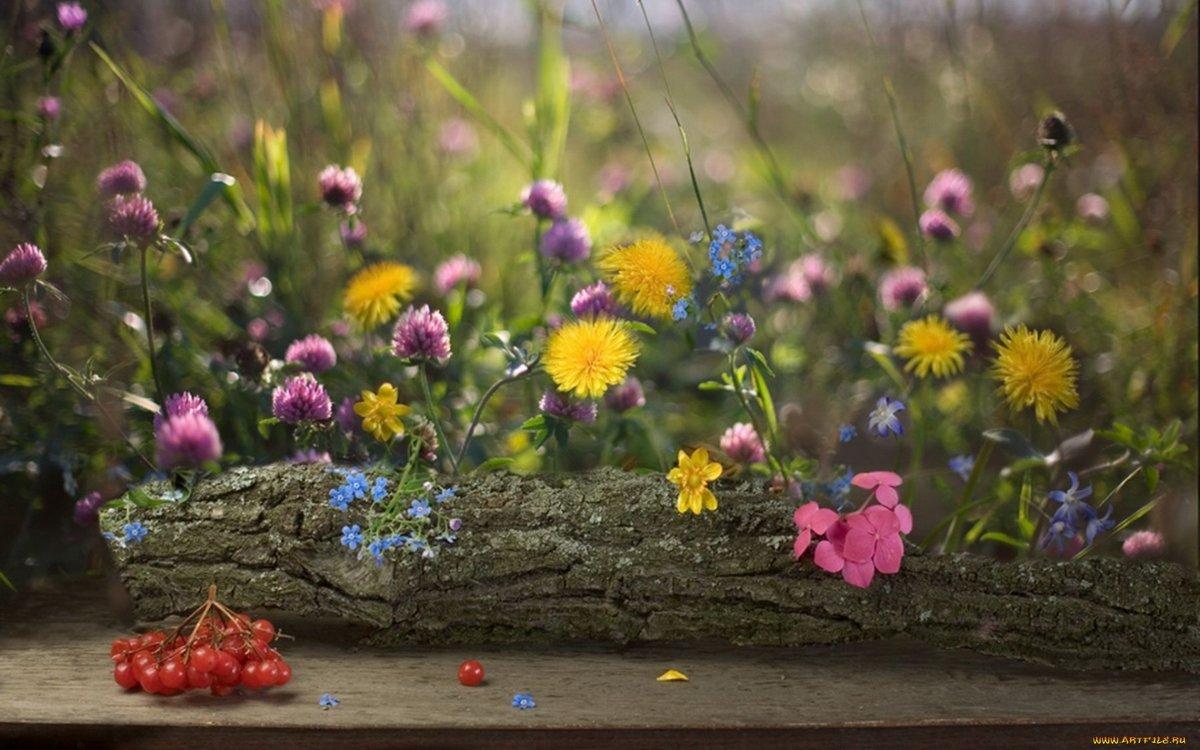 Букеты полевые цветы макросъемка, букет бор какие