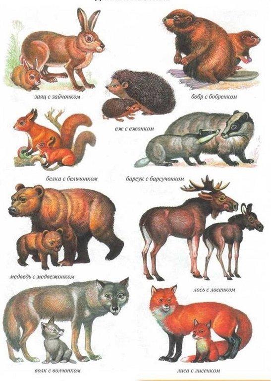 Дикие животные и их дети картинки для детей