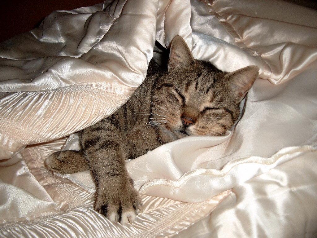Картинки котенок спит в кровати