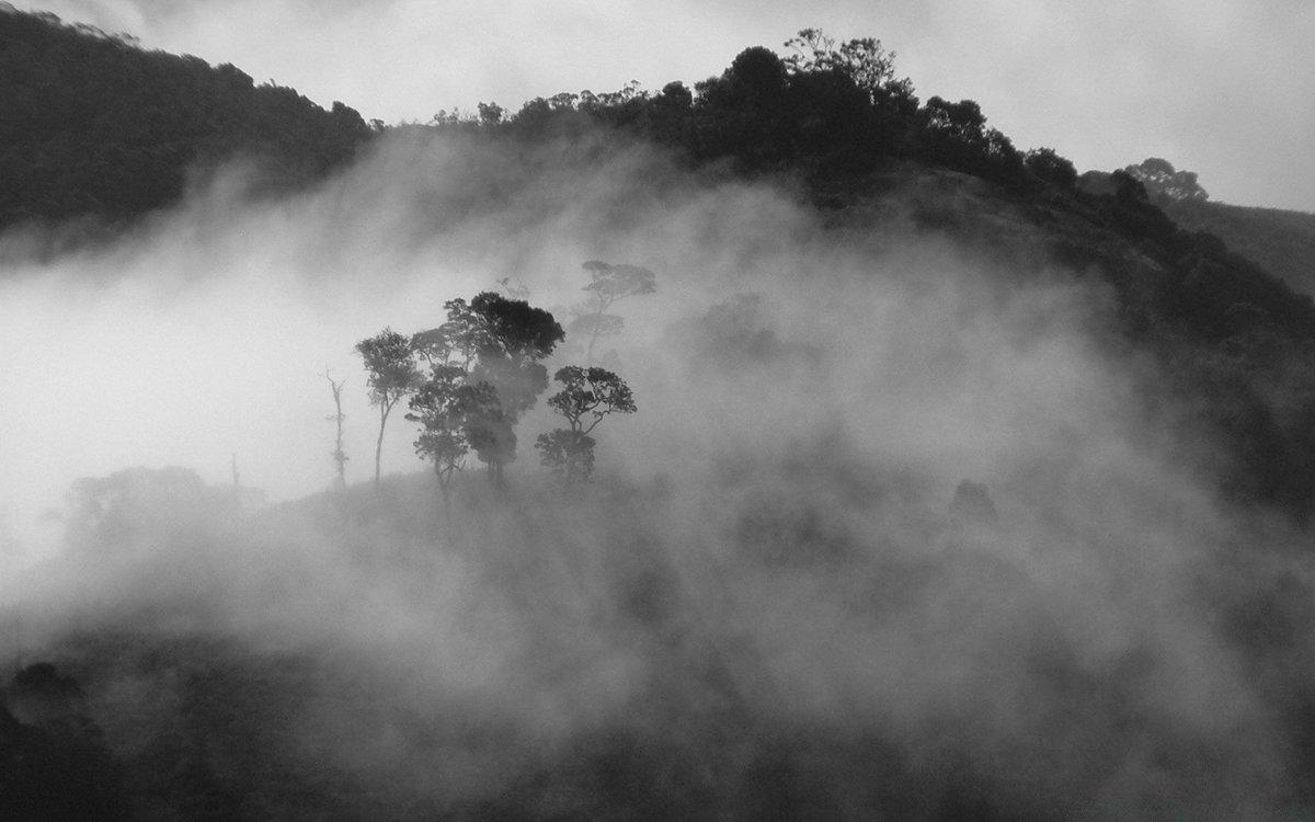 черный туман картинки выпуском ведущие шоу