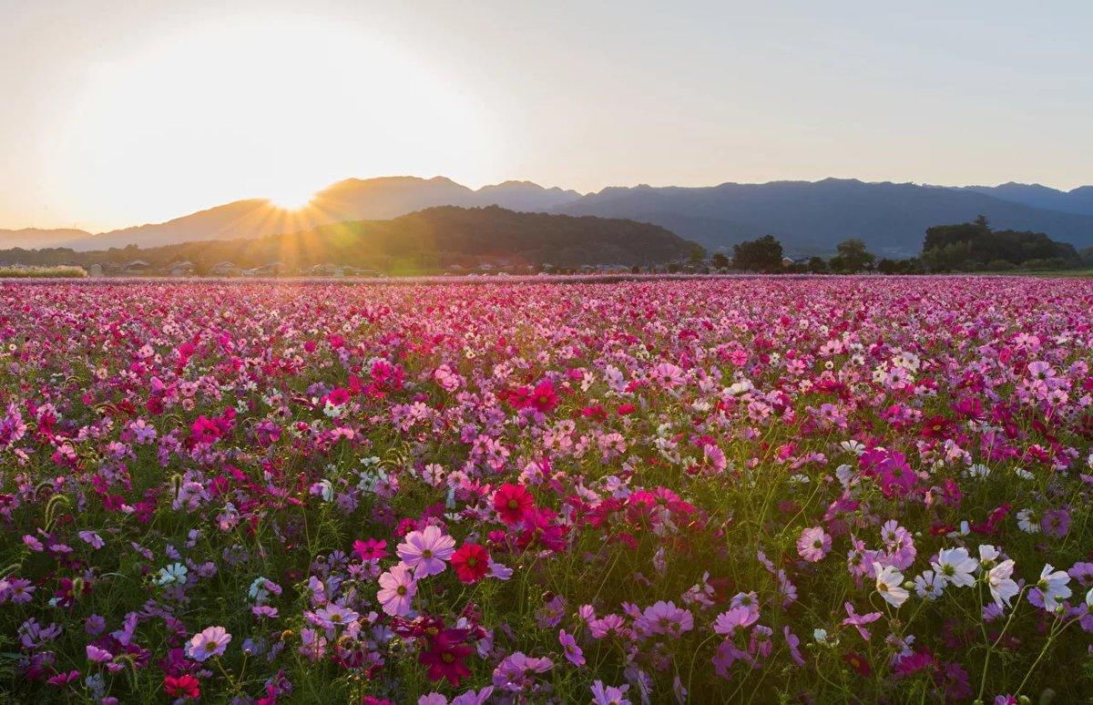 Фотографии красивого цветочного поля красивые творческие