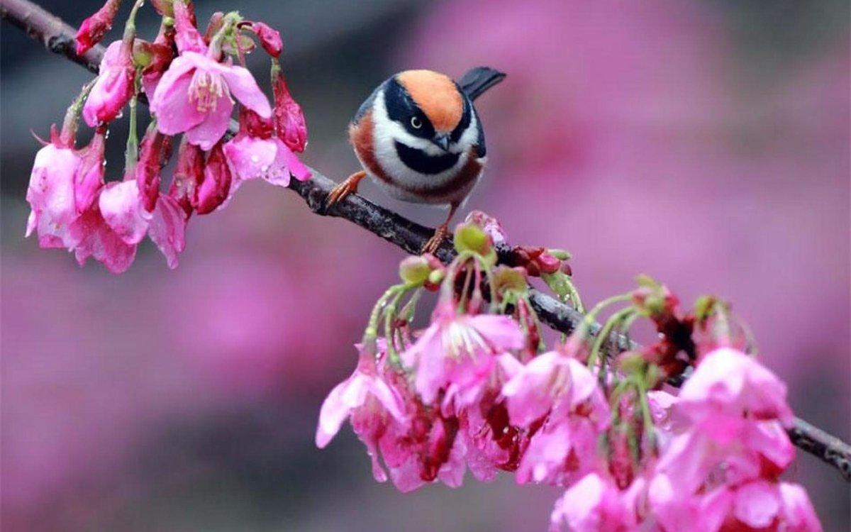 мангала-коптильни занимает красивые позитивные картинки про весну стоит выбирать