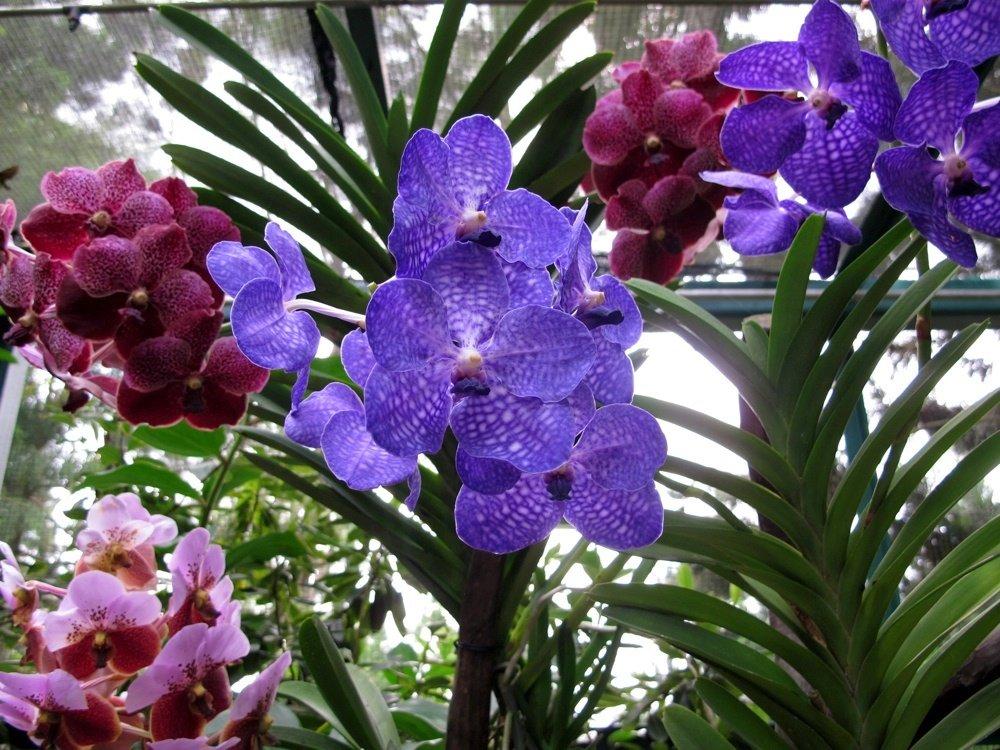 виды орхидей фото и названия многие фильмы мультсериалы