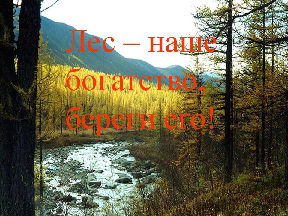 Картинки леса с надписями