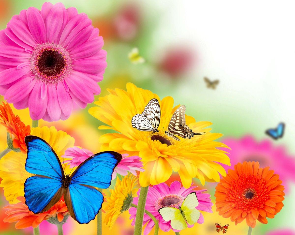 Открытки с бабочками фото
