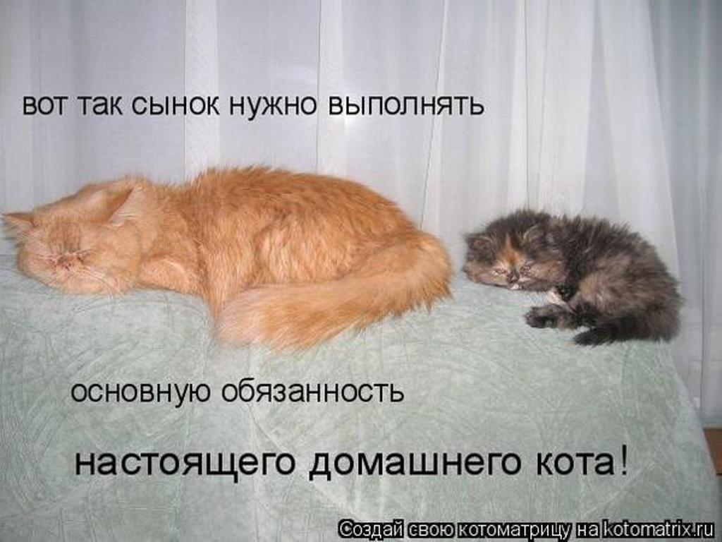 Смешные картинки с надписями про кошек